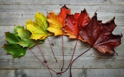 Autumn Yinto Rebalance
