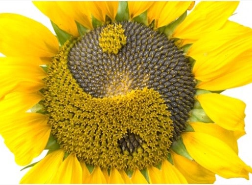 Happy & Bright: A Summer Yin & Yoga Nidra Workshop